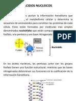 6. Acidos Nucleicos