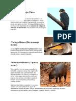 Animales en Peligro de Extincion Els Alvador