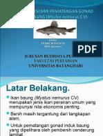 Presentasi Rproduksi Ikan Baung