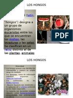 loshongosysuscaracteristicas-101207163042-phpapp02