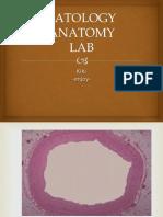 Patology Anatomy