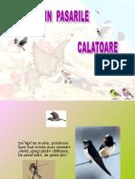 Www.power-point.ro 1372 Vin Pasarile Calatoare