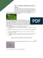 Cómo Sembrar y Cultivar Artemisia Annua