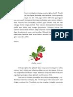 glikosida fenolik farmakognosi