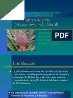 010600401 PIÑA