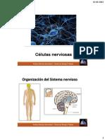 3°E-C10-Células-nerviosas