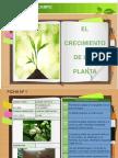 Crecimiento plantas