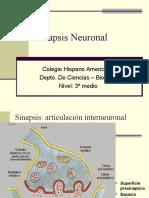 Unidad 1- Sinapsis Neuronal