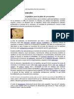 foods-that-produce-serotonin.pdf