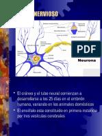 Patologias Del Sistema Nervioso