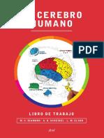 el_cerebro_humano.pdf