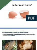 Formación Del Huevo