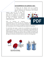 Osmosis y Permeabilidad en Los Glóbulos Rojos