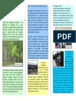 Gazi Women Mangrove Boardwalk Brochure Low