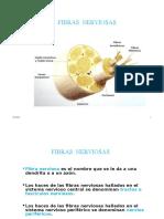 FIBRAS NERVIOSAS, NERVIO PERIFERICO Y RECEPTORES..ppt