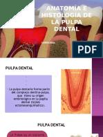 Pulpa Dental Cario