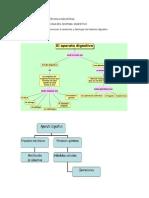 Guia de Sistema Digestivo Grado Sexto