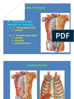 Sistemul vascular - veneIII.pdf