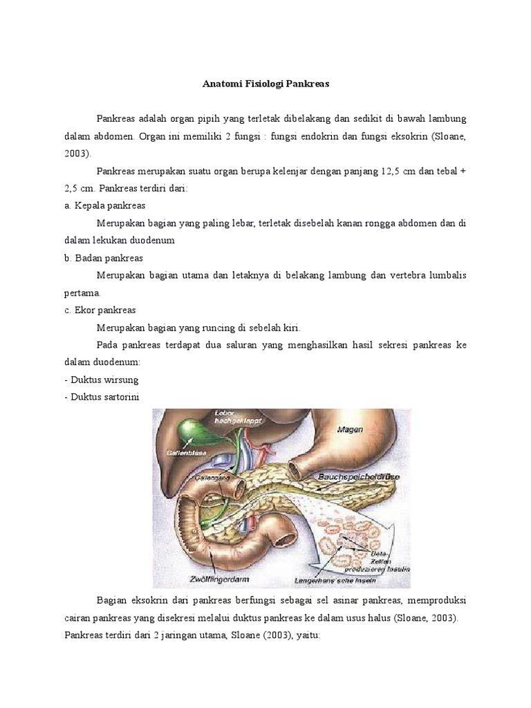 Tolle Pankreas Galerie - Anatomie Und Physiologie Knochen Bilder ...