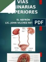i Clase Vías Urinarias Superiores la nefrona