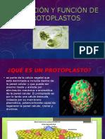 Obtención y Función de Protoplastos