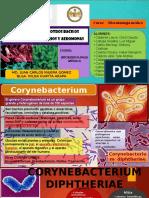 Corynebacterium y Otros Bacilos Gram Positivos, Vibrios y Aeromonas