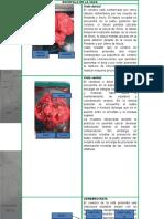 Informe Zoologia Cerebros 2