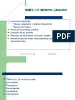 Conceptos Centrales Del Sistema Vascular Presentación