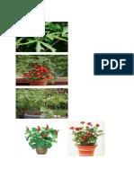 small plants.docx