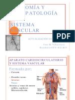2 Anatomia Fisiologia Del Sistema Vascular