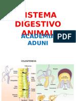 Clase Sistema Digestivo Animal