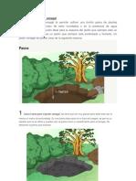 Cómo Crear Un Jardín Cenagal