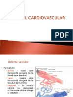 Curs 7. Sistemul Vascular