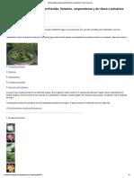 Plantas Acuáticas de Aguas Profundas, Flotantes, Oxigenadoras y de Ribera o Palustres