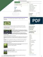 Estanque_ mantener limpia el agua del estanque.pdf