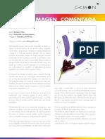 Sesión 02p Imagen comentada - Rosana.pdf