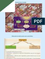 32º - Fotossíntese.pdf
