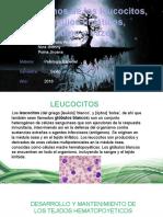 Transtornos de Los Leucocitos, Ganglios Linfaticos, Timo y Bazo