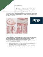 Histología de Los Vasos Sanguíneos RES