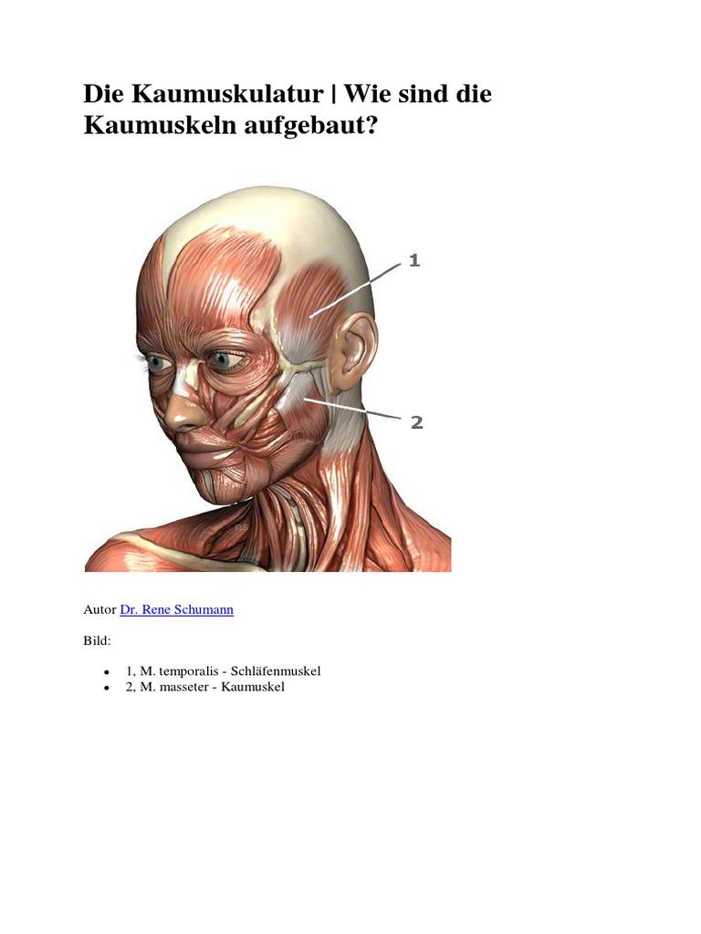 Niedlich Seitenwand Der Nasenanatomie Fotos - Anatomie Ideen ...