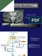 Integracion Metabolica Hidratos de Carbono 2014