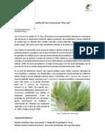 Pinus Tecunumanii Eguiluz 1