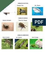 Animales en Kaqchiquel