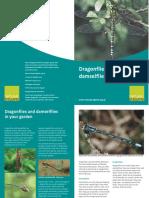 GardenDragonflies_0