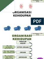 Organisasi Hidupan