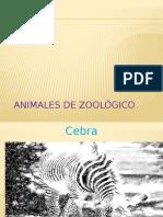 animales del zoologico