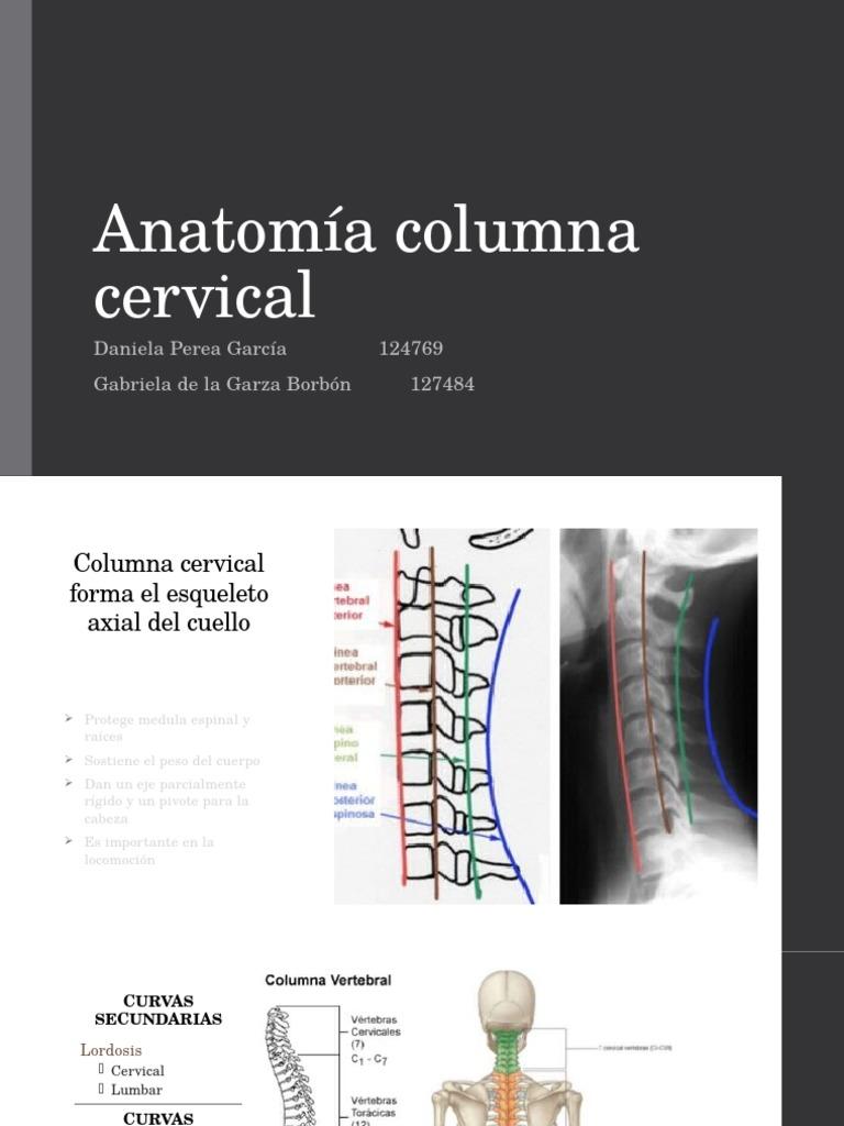 Anatomia Cervical