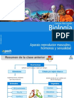 Clase 13 Aparato Reproductor Masculino,Hormonas y Sexualidad 2015