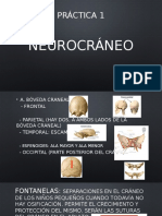 Neurocráneo