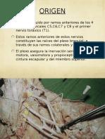 Clase de Inervacion e Irrigacion Del Mie (1)